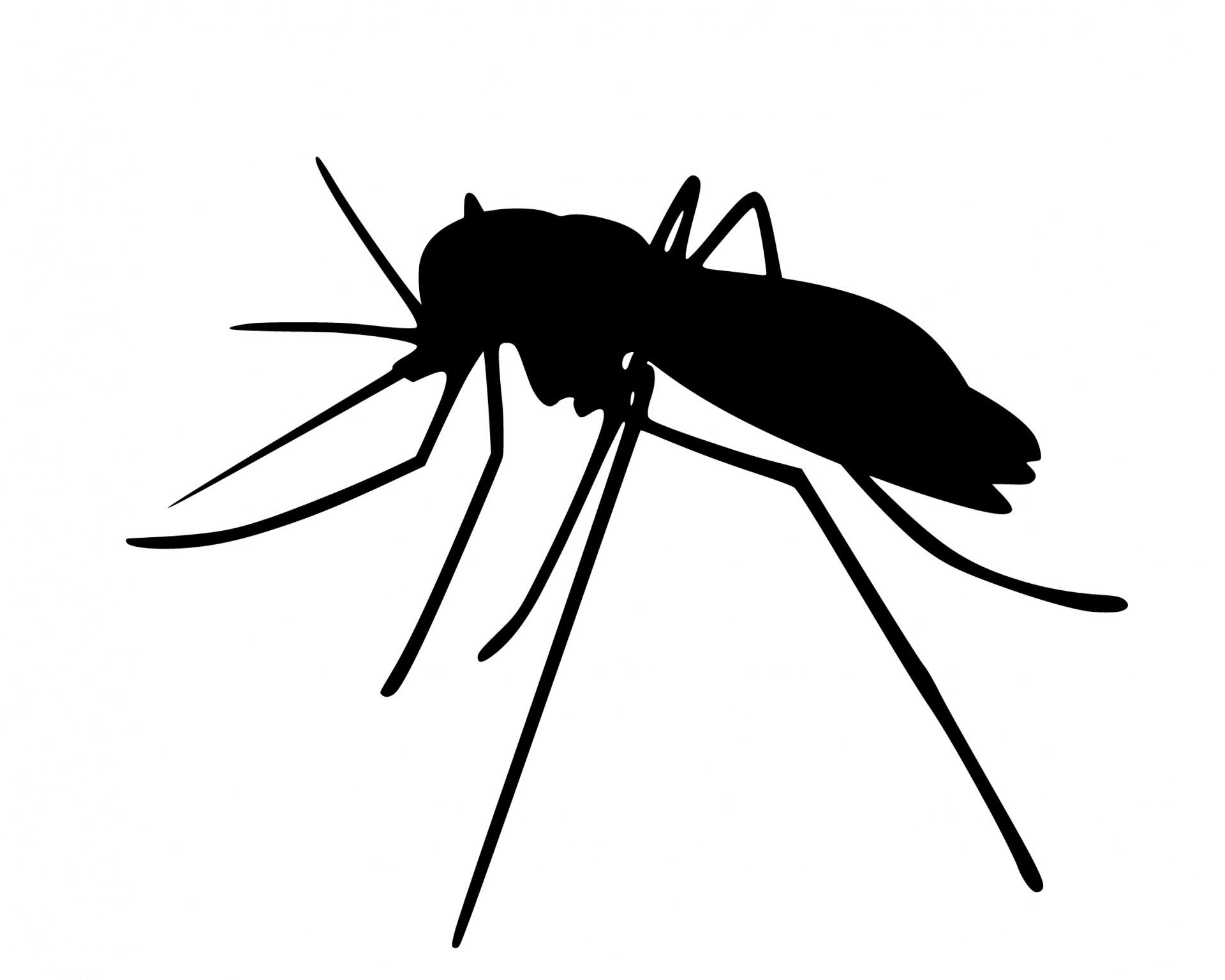 mosquito-insects-silhouette-ae
